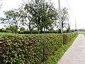 Sint-Pieters-Leeuw Wolfpoortstraat Hoogstamboomgaard met afsluitingshaag (2) - 216560 - onroerenderfgoed.jpg