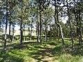 Skagen - panoramio (14).jpg
