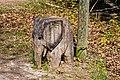Skulpturenstraße Weisweil jm136582.jpg