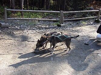 Sled Dog Discovery & Musher's Camp 10.jpg