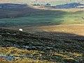 Slopes of Little Heaplaw - geograph.org.uk - 297999.jpg