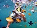 Snorkeling Pulau Sepa.JPG