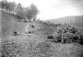 Soldaten räumen Wurzeln und Steine aus einem gerodeten Waldstück - CH-BAR - 3241216.tif