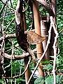 Sommerfugl, Bornholms Sommerfuglepark 28.jpg