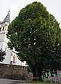 Sommerlinde bei der Leonhardikirche, Bad St. Leonhard i.Lav. Bezirk Wolfsberg, Kärnten.jpg