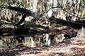 Spring Creek 6 (6466590403).jpg