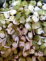Sprouts of Green Gram.jpg