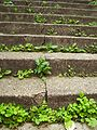 Stairs with weed.jpg
