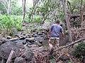 Starr-120229-2871-Syzygium cumini-trees by river with Jeremy-Waikapu Valley-Maui (25017942082).jpg
