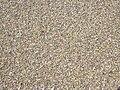 Starr 030923-0252 Aleurites moluccana.jpg