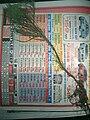 Starr 050326-5271 Casuarina equisetifolia.jpg