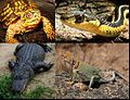 State reptile collage.jpg