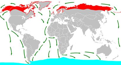 Карта миграции Полярной крачки. Содержит ссылку на Википедию