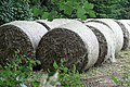 Straw bales ready for use - geograph.org.uk - 918418.jpg