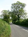 Stretton Lane near Houghton on the Hill - geograph.org.uk - 456166.jpg