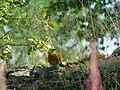 Strnadica žutovoljka, mužjak (Emberiza citrinella); Yellowhammer, male.jpg