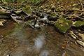 Stužická rieka, Národná prírodná rezervácia Stužica, Národný park Poloniny (07).jpg