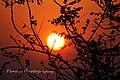 Sun rise 3rd eye.jpg