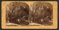 Sunshine and shadow, King St., St. Augustine, Fla, from Robert N. Dennis collection of stereoscopic views.png