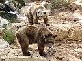 Syrian brown bears 01.jpg