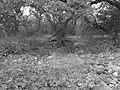 TACgroove - panoramio.jpg