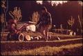 TONY OWEN ORGANIC FARM - NARA - 543017.tif