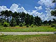 Tall Pines State Preserve - July 2017.jpg