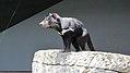 Taronga Zoo, Sydney (483448) (9440325969).jpg