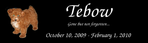 Tebow dog banner.png