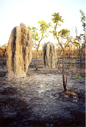 Evolutionary history of life - These termite mounds have survived a bush fire.