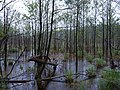 Teufelsbruch swamp with blooming Utricularia vulgaris and rain 03.jpg
