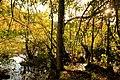 Teufelssee mit jungen Buchen am Ufer (2).jpg