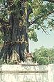 Thailand1981-002.jpg
