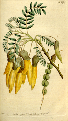 The Botanical Magazine, Plate 167 (Volume 5, 1792).png