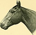 The Horse - its treatment in health and disease, with a complete guide to breeding, training and management (1905) (14760944731).jpg