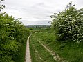 The Icknield Way in Holwell CP - geograph.org.uk - 89051.jpg