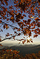 The Last Leaves of Fall (22085661654).jpg