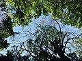 The Secret Beauty of Nature in Srilanka 832964BF-2C7E-440C-8411-3C474B5CE0B8.jpg