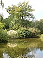 The Water Garden, Cliveden - geograph.org.uk - 60109.jpg