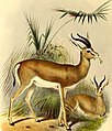The book of antelopes (1894) (14782390355).jpg