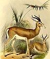 The book of antelopes (1894) (14782390355).jpg