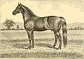 The breeds of live stock, and the principles of heredity (1887) (14758126376).jpg