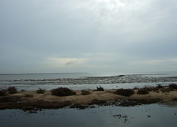 350px Tidal mud flats, East Mersea   geograph.org.uk   1182464 2010 Mar 20   Tammy Bbw Tgp   Curvykaitlin.com   The Curviest BBW Southern ...
