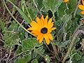 Tienie Versfeld Wildflower Reserve-P9210018.jpg
