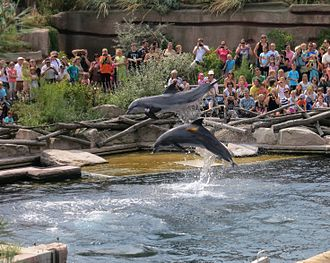 Nuremberg Zoo - Show in the Dolphin Lagoon
