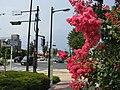 Tokyo Route 12 -02.jpg
