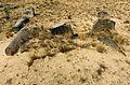 Tombstones - Jewish cemetery in Karczew, Otwock County, Masovian Voivodeship, Poland. - panoramio (6).jpg