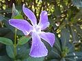 Torreblanca flor violeta 2.jpg