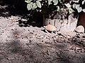 Tortoise20171111 125356.jpg