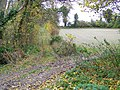 Track near Damerham - geograph.org.uk - 1047931.jpg
